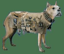 Perros militares, Judy
