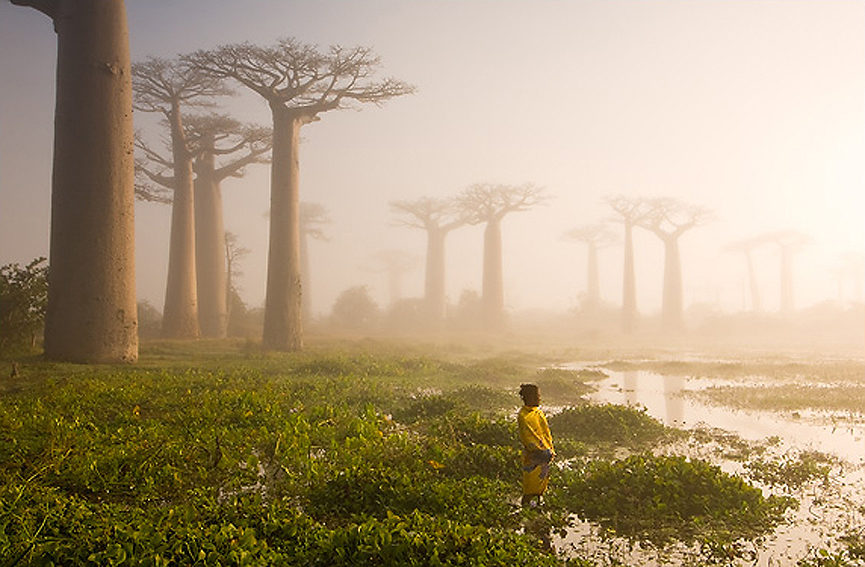 Esta fotografía fue ganadora del World In Focus Travel Photography. Marsel van Oosten