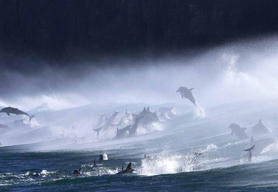 Estampida delfines
