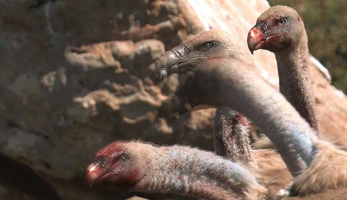 Fauna salvaje del norte de España
