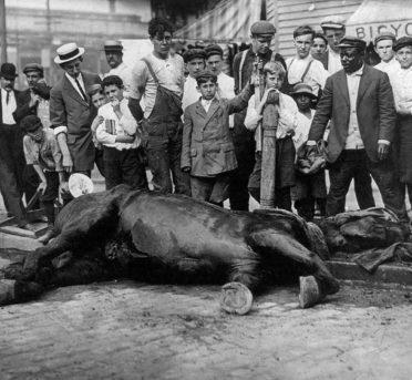 Animales del pasado siglo